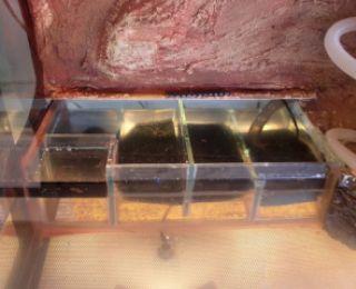 Inbouw Filter biologisch + kam en filtermateriaal 30-50 liter