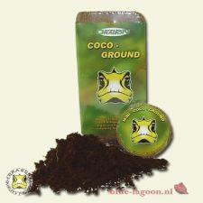 Dragon Coco Ground Blok