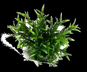 RepTech Terrarium Plant Fine Leaves
