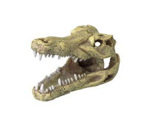 Aqua Della Crocodile Skull L