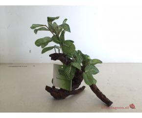 RepTech Terrarium Plant Ficus S